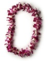 Bombay Orchid Single Lei  High School Lei