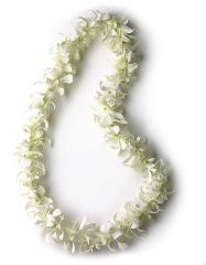 SINGLE STRAND WHITE DENROBUIM LEI