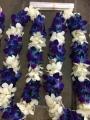 BLUE & WHITE DOUBLE LEI