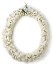 DOUBLE WHITE DENDROBUIM LEI