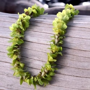SINGLE STRAND GREEN ORCHID LEI