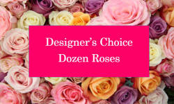 DESIGNERS CHOICE DOZEN ROSES