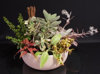 Deluxe Succulent Garden