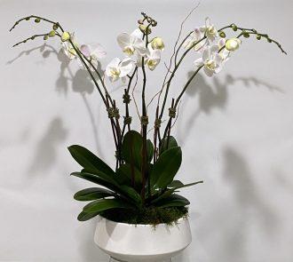 Orchid Housewarmer