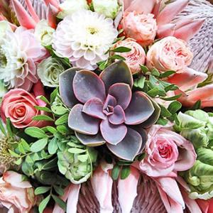 Designer Choice Pinks and Purples