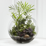 Bowl Terrarium