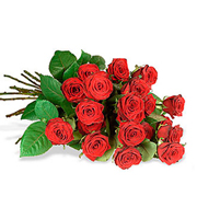 One Dozen Medium Stemmed Roses