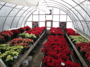 The South Greenhouse