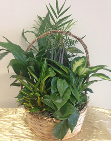 Basket with Green Plants