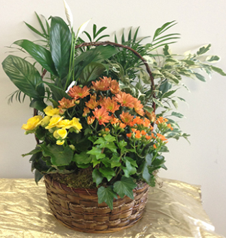 Blooming and green plants in basket