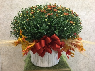 HARDY MUM- IN OUTDOOR BASKET & FALL TRIM
