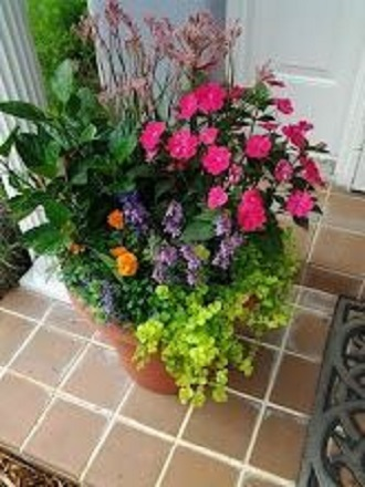 Mixed Patio Pot- Outdoor blooming plants