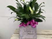 PEACE LILY WITH PLAQUE