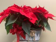 2020 POINSETTIA DOUBLE  BASKET