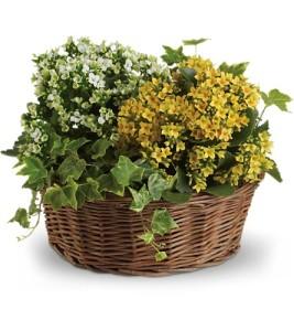 TF Basket of Joy