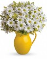 TF Sunny Day Pitcher of Daisies