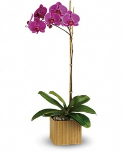 TF Imperial Purple Orchid