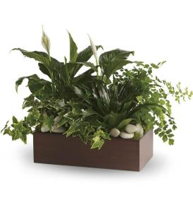 TF Quiet Expressions Planter
