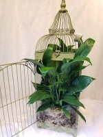 Large Birdcage with Green Plant