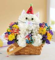1-800-Flowers Purrfect Party Cat