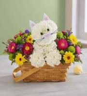 1-800-Flowers Fabulous Feline