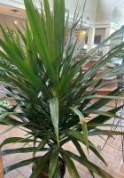 The Jungle Plant