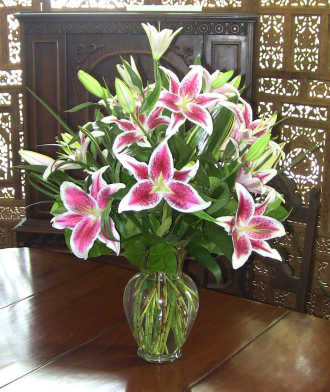 Stargazer Lilies of the Field