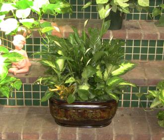 Dalton\'s Garden Planter