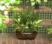 Dalton's Garden Planter