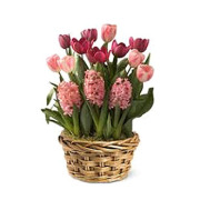 Mixed Blooming Bulb Basket