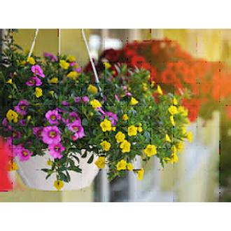 Beautiful blooming 10