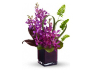 Elegant Orchid Bqt