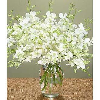 Abundant Orchid Blooms Bqt