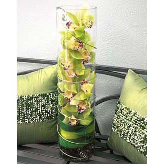 Contemporary Green Orchid Cylinder Arrangement