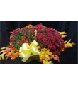 Garden Mum Plant in Triple Basket Deluxe