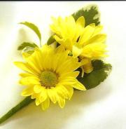 Double Yellow Daisy Boutonniere
