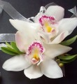 Double Mini Cymbidium Orchid