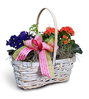 Flowers By Bauers Blooming Garden Basket