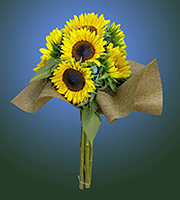 6 Stem Jarrettsville Sunflower Bouquet! Delivered!