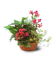 Flowers By Bauers Dish Garden With Pinks