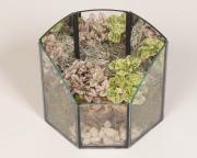 Garden Terrarium 3