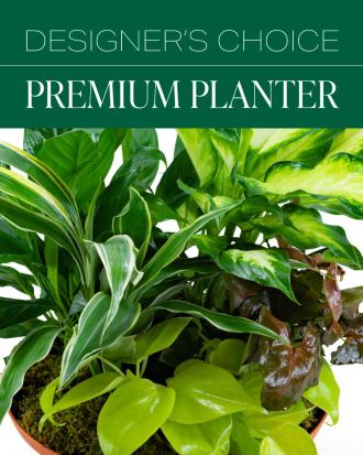 Designer's Choice Premium Planter