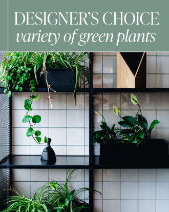 Designer's Choice - Variety of Green Plants