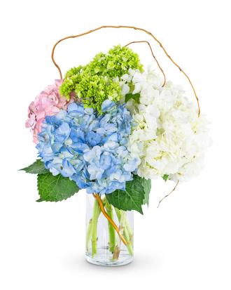 Sweet Hydrangea
