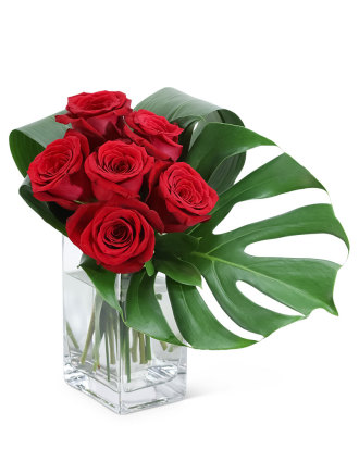 Modern Roses- 6