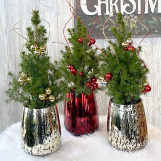 Living Mini Christmas Tree in Mercury Glass Vase