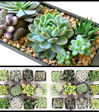 SAME DAY DELIVERY of SUCCULENT  Gardens in Grand Rapids metro area, Sunnyslope Floral Grand Rapids delivery florist