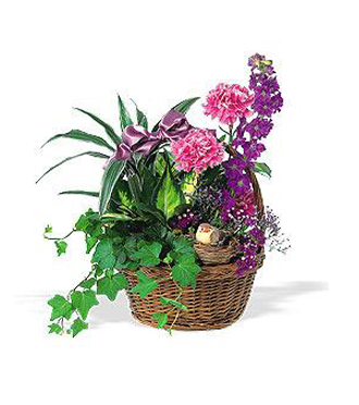 Custom made green & blooming plants in a basket for delivery to the home or business for birthday, sympathy, get well or any occasion by Sunnyslope Floral