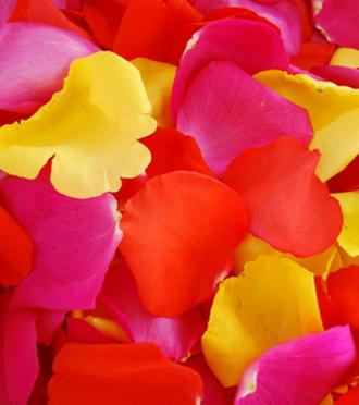 FRESH ROSE PETALS - Sunnyslope's Bed of Roses Rose Petal Package