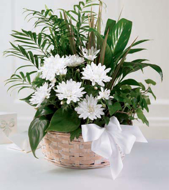 Dish garden of green plants for sympathy delivery in Grand Rapids to funeral homes, businesses & homes, Sunnyslope Floral florist